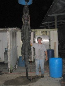 Paul Ambrossino and his gator 8/09